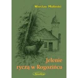Jelenie ryczą w Rogozińcu
